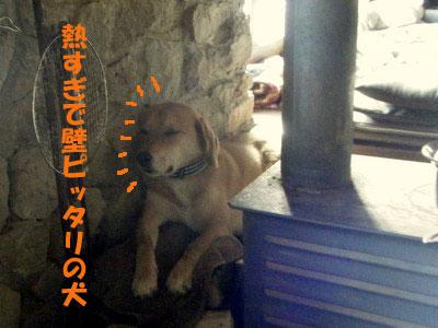 壁ピッタリでじっとする犬