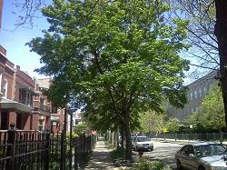 Tree 4 green