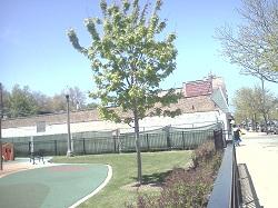 Tree 3 green