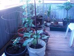 0 Porch Garden