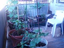 0 Porch Garden 2
