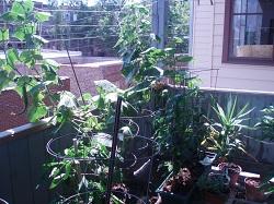 01 Porch Garden 2