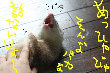 IM0G_4278.jpg
