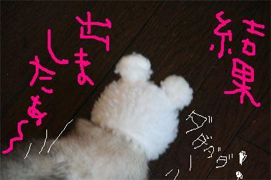 IMG_497404.jpg