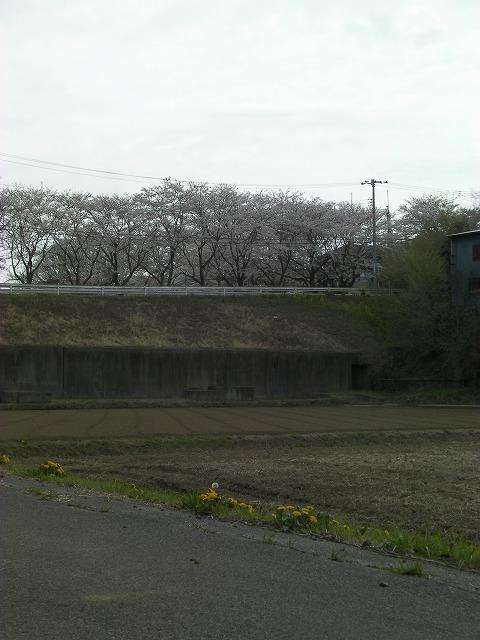 s-14-11年0410