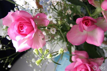 正月の花9MG_4356