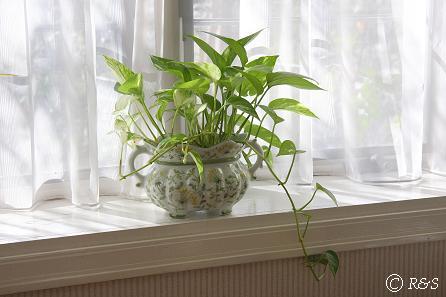観葉植物1IMG_4457