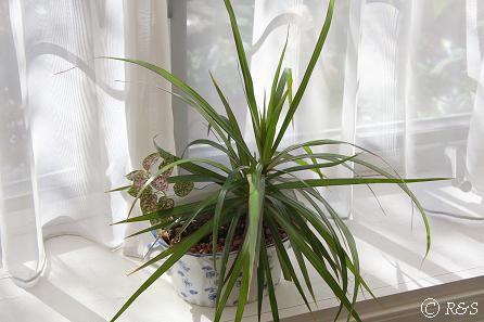 観葉植物5IMG_4479