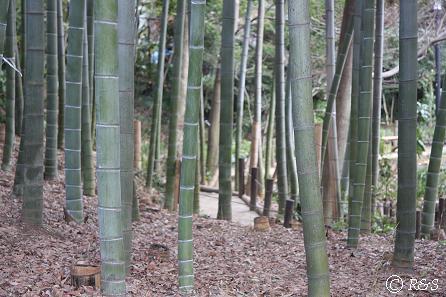 実篤公園4IMG_5374