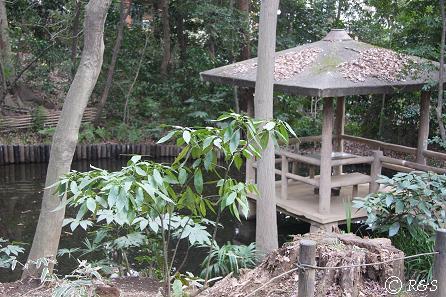 実篤公園16IMG_5379