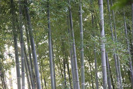 実篤公園5IMG_5382