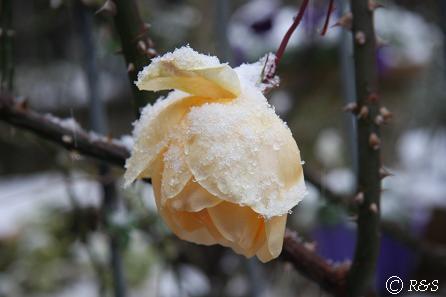 雪のヒリンドン2IMG_5471