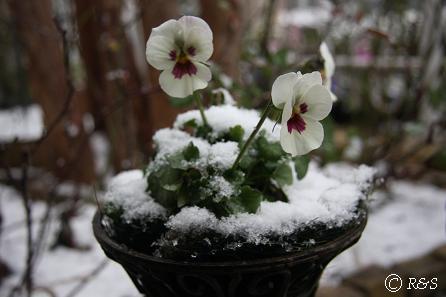 雪うさぎIMG_5468