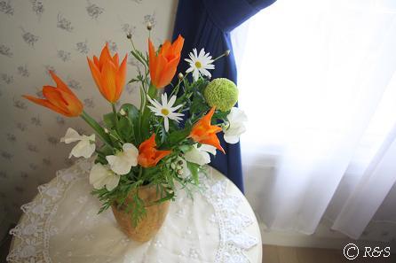 オレンジ色のチューリップ4IMG_5500