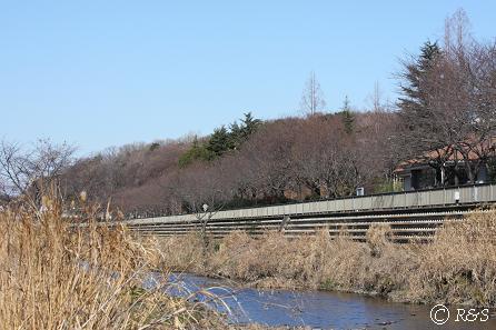 野川1IMG_5940