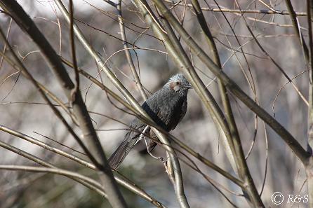 鳥1IMG_5881