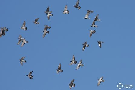 鳥5IMG_5945