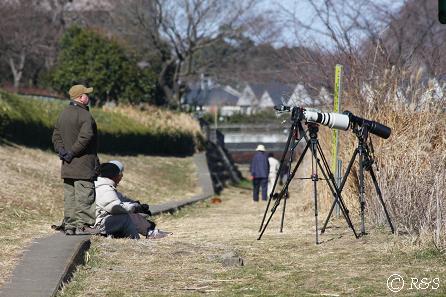 野川のカメラマン1IMG_5950