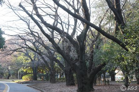 駒沢公園04IMG_6489