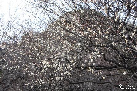 駒沢公園18IMG_6530