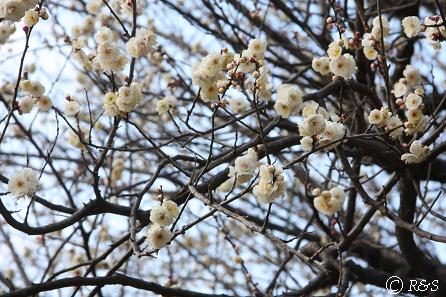 駒沢公園19IMG_6532