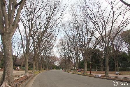 駒沢公園40IMG_6584