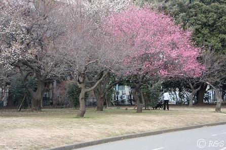 駒沢公園25IMG_6568