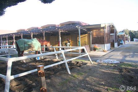 馬事公苑-きゅう舎の馬1IMG_7461