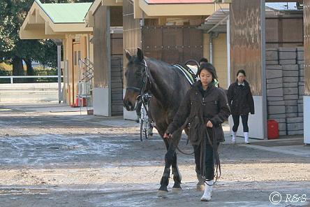 馬事公苑-きゅう舎の馬2IMG_7171