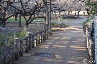 砧公園-橋3小IMG_7952