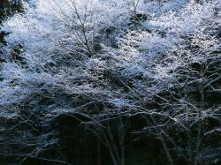 雪景色風景_convert_20120217095101