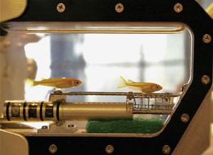 宇宙の水槽の金魚