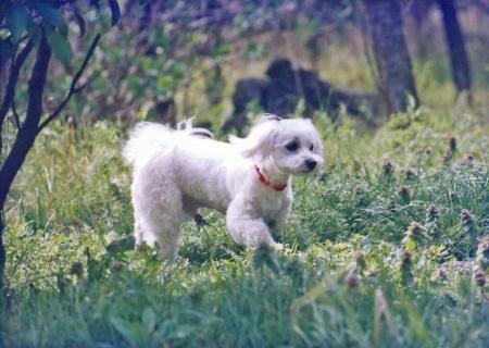 マルタ君が緑の森の中を散歩