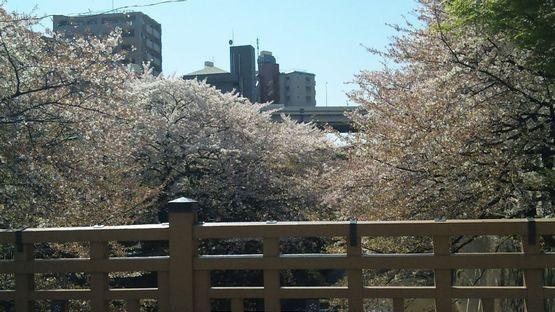 110413_133918sakura.jpg