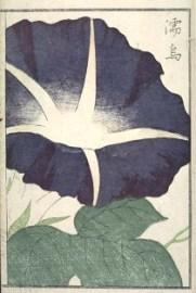 「花壇朝顔通」(文化12、1815)