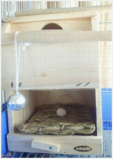 卵は巣箱に