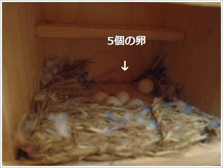 もっちーの卵
