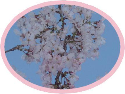 公園の早咲きの桜