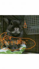 004_20110704180820.jpg