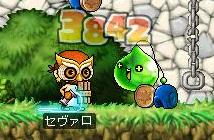 Maple073.jpg