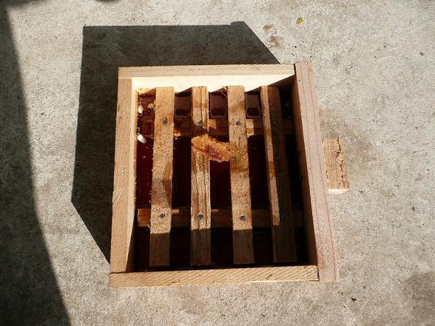 エサ箱に蜂子捨て1