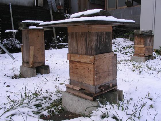 雪中の蜜蜂 001