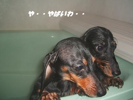 お風呂♪ 023