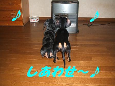 暖かい♪ 025