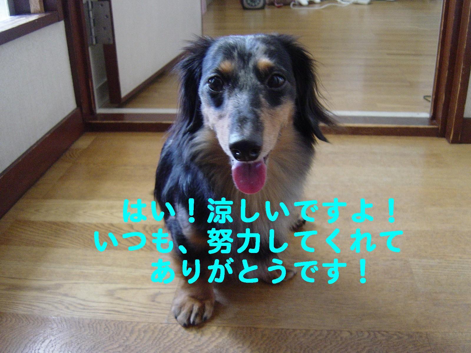 ありがとうです~~~~~~~~~~~~~!