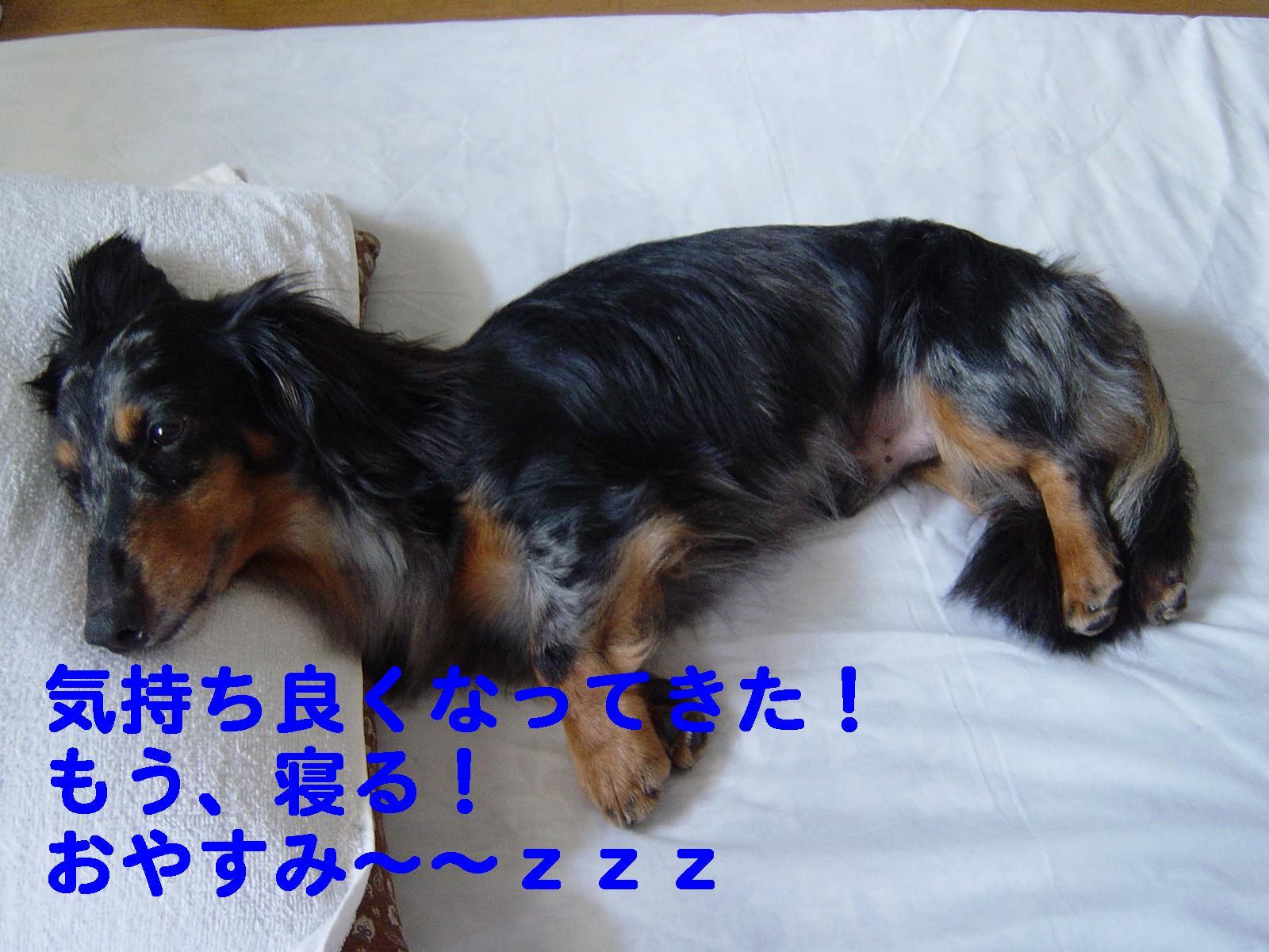 おやすみ~~~~~~~~~~!
