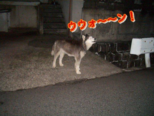 遠吠え!!