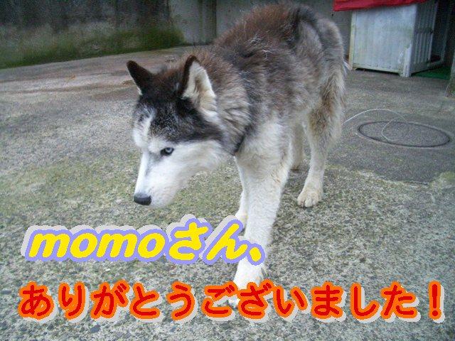 momoさん、ありがとうございました!