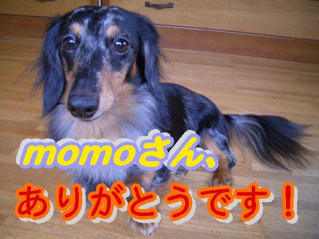 momoさん、ありがとうです!