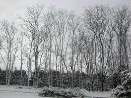 20080117yuki.jpg